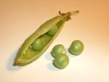 Erbsen123 Peas