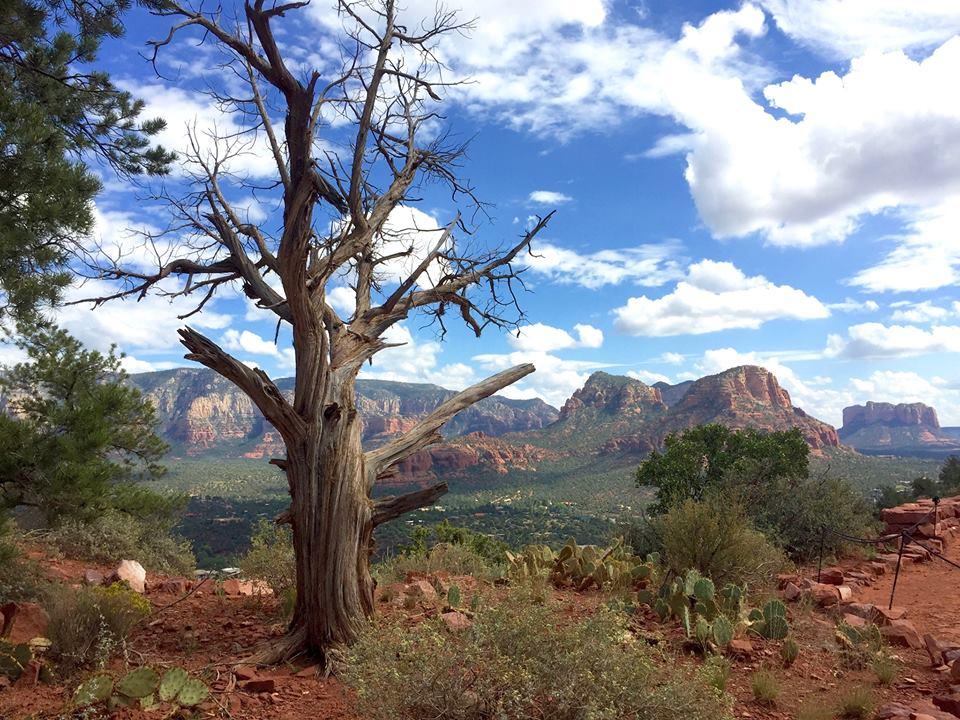 Beauty, Wilderness, Desert, Sermon, Advent 2A, Matthew 3:1-12, John the Baptist, Repent, Repentance, Kingdom of Heaven