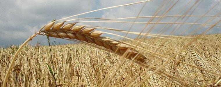 Unless a grain of wheat, Lent, Lent 5B, Sermon, John 12:20-33, Sermon, Detachment, Letting Go